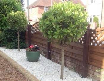 Replanted Bay trees