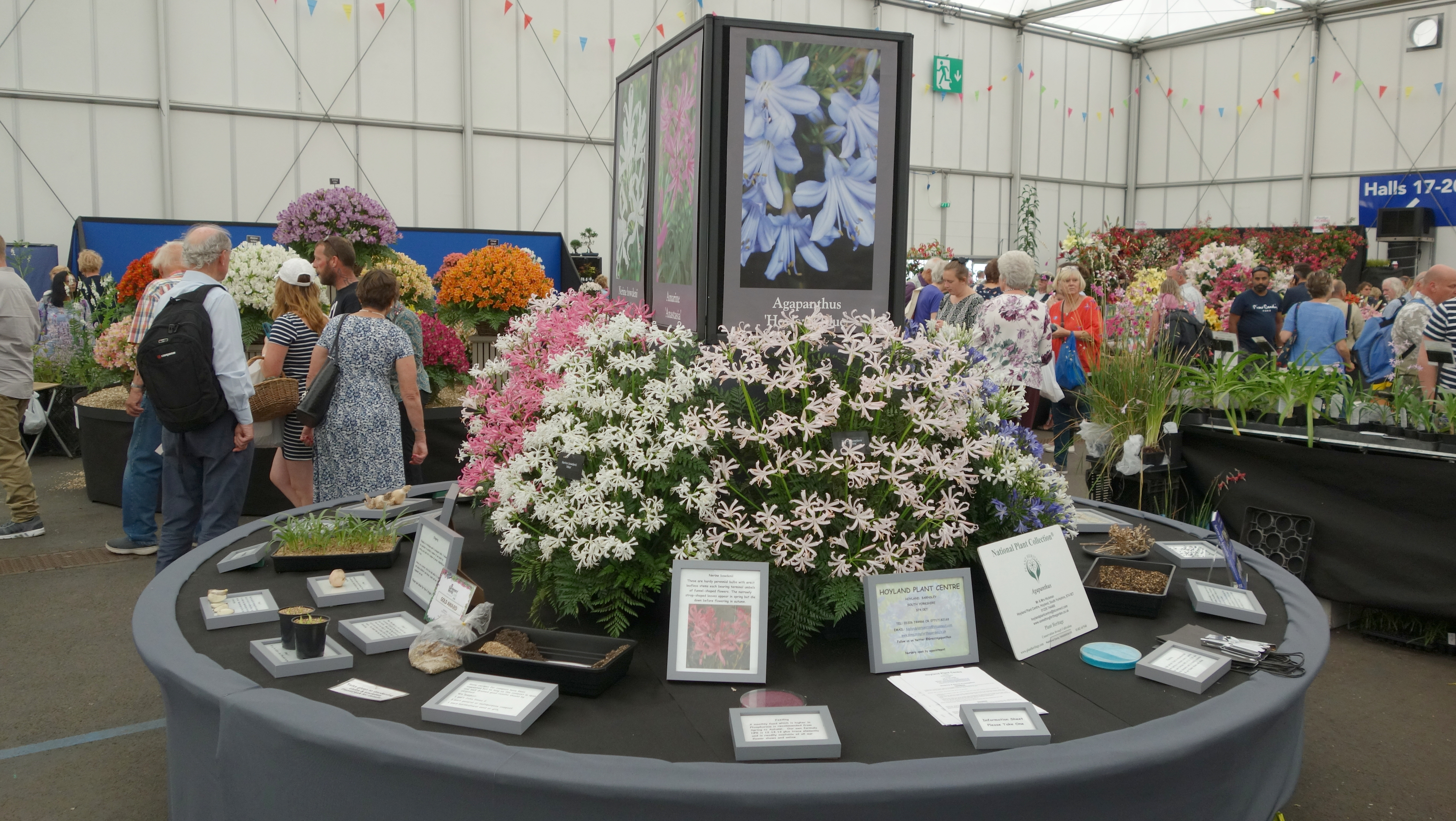 Agapanthus Display In Gardeners World Live Marquee