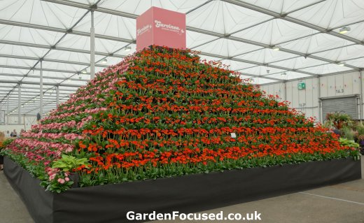 Display of Gerberas in floral marquee