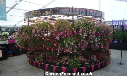 Fuchsia in floral marquee at Chatsworth