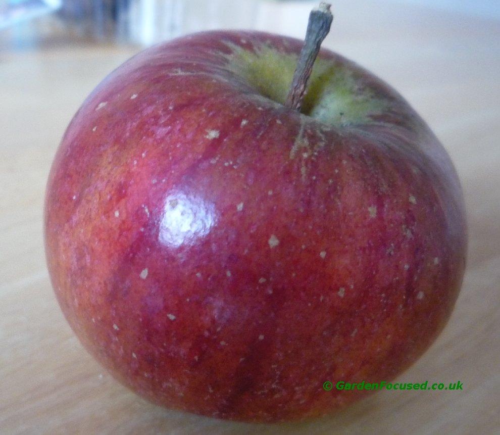 cox orange pippin apples