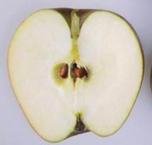 Winston apple cut in half