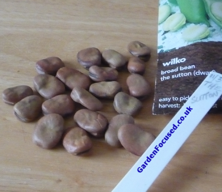 How To Cook Broad Beans Uk