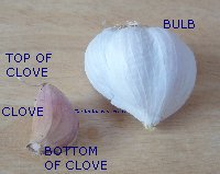 Picture showing bottom and top of a garlic clove