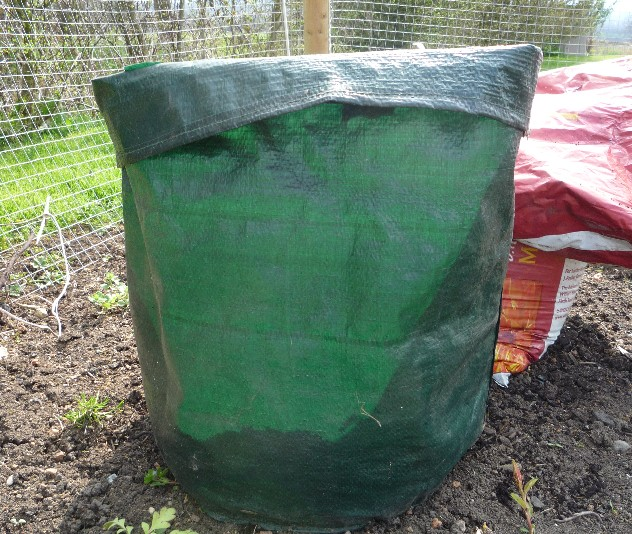 how to grow potatoes container