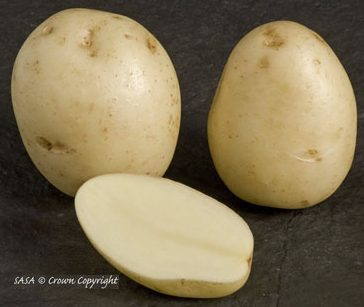 Buying Swift Seed Potatoes In The Uk