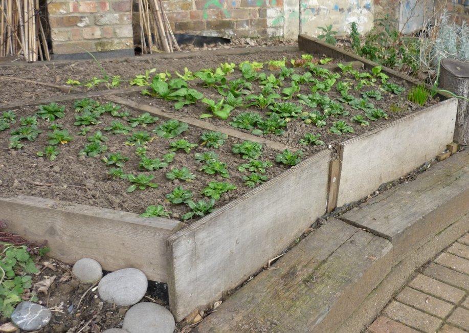 GardenFocused