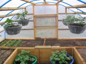 View 1 of interior of homemade, covered raised beds