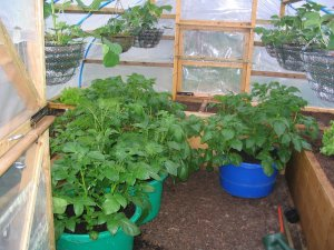 View 3 of interior of homemade, covered raised beds