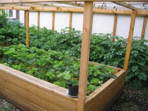 View 4 of interior of homemade, covered raised beds