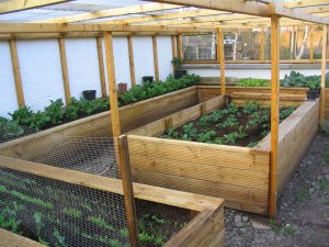 View 5 of interior of homemade, covered raised beds