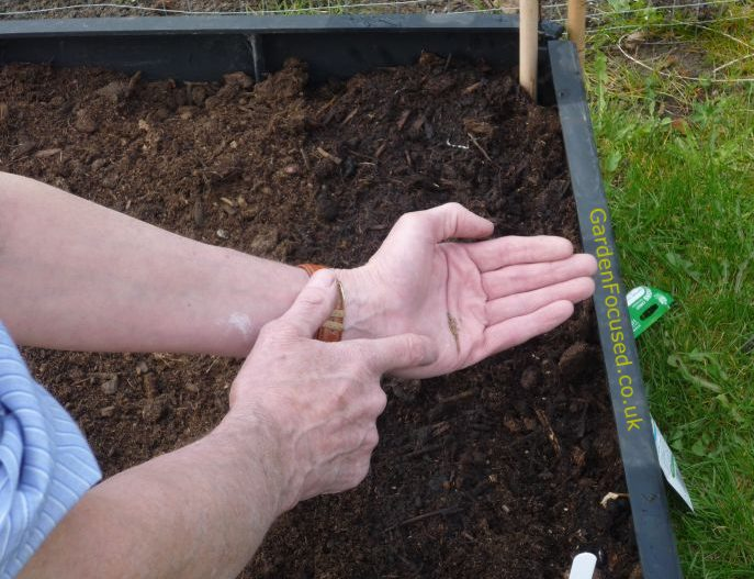 Sowing carrots in a raised bed garden