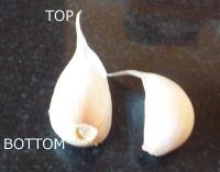 Top and bottom of a garlic clove